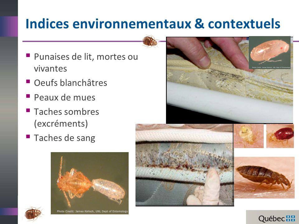 Indices environnementaux & contextuels Punaises de lit, mortes ou vivantes Oeufs blanchâtres Peaux de mues Taches sombres (excréments) Taches de sang