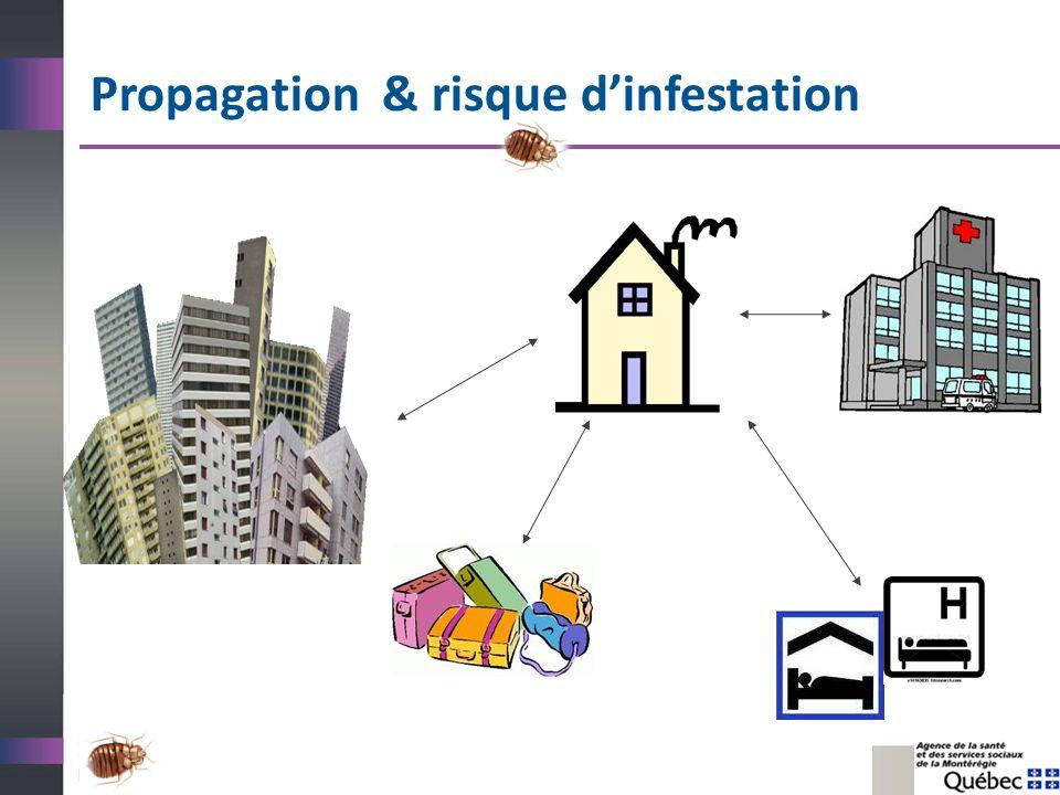 Des pistes dactions au CSSS Mandater un comité responsable/une équipe « punaises de lit » et se doter dun plan daction pour la prévention et la gestion des infestations.