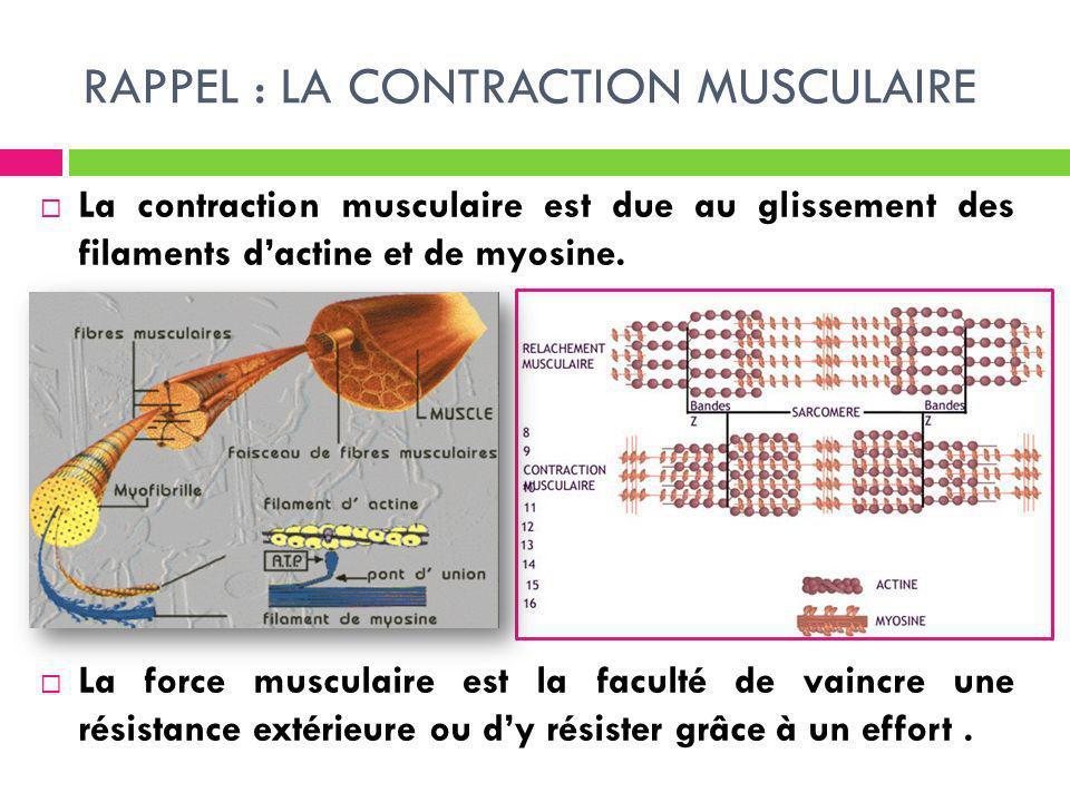 RAPPEL : LA CONTRACTION MUSCULAIRE La contraction musculaire est due au glissement des filaments dactine et de myosine. La force musculaire est la fac