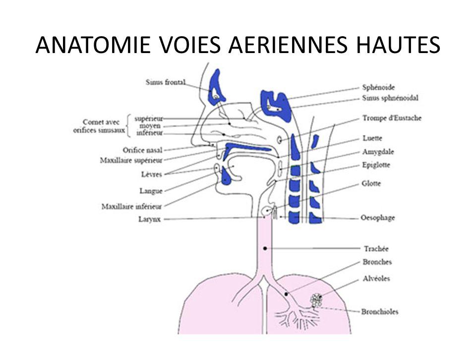 ANATOMIE VOIES AERIENNES HAUTES