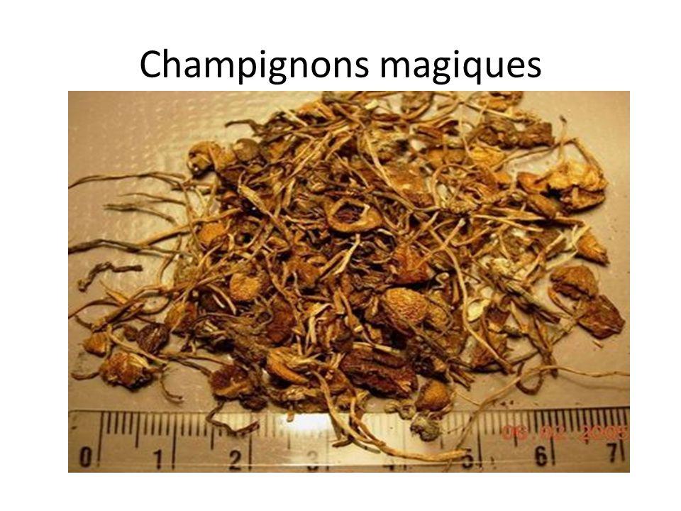 Champignons magiques