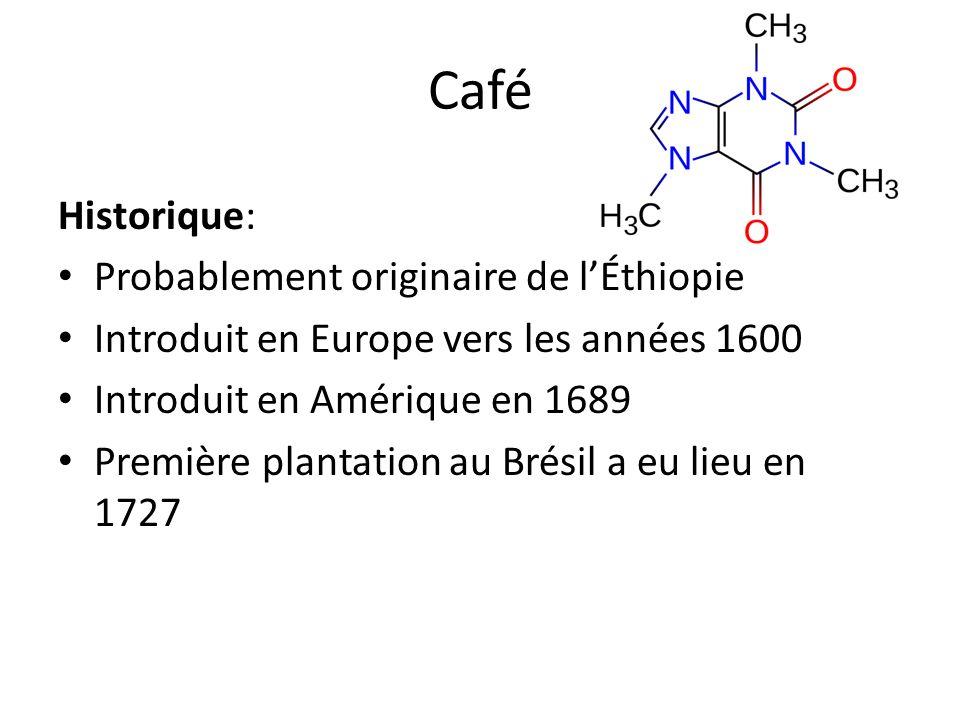 Historique: Probablement originaire de lÉthiopie Introduit en Europe vers les années 1600 Introduit en Amérique en 1689 Première plantation au Brésil