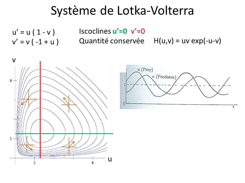 Système de Lotka-Volterra u = u ( 1 - v ) v = v ( -1 + u ) Iscoclines u=0 v=0 Quantité conservée H(u,v) = uv exp(-u-v) u v