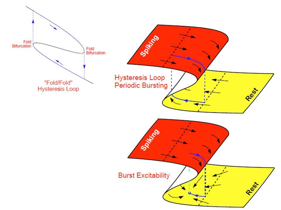 Exercice : retrouver ces quatre bifurcations dans des systèmes à deux échelles de temps (en modifiant la forme des isoclines dans le système de Fitz-Hugh Nagumo)