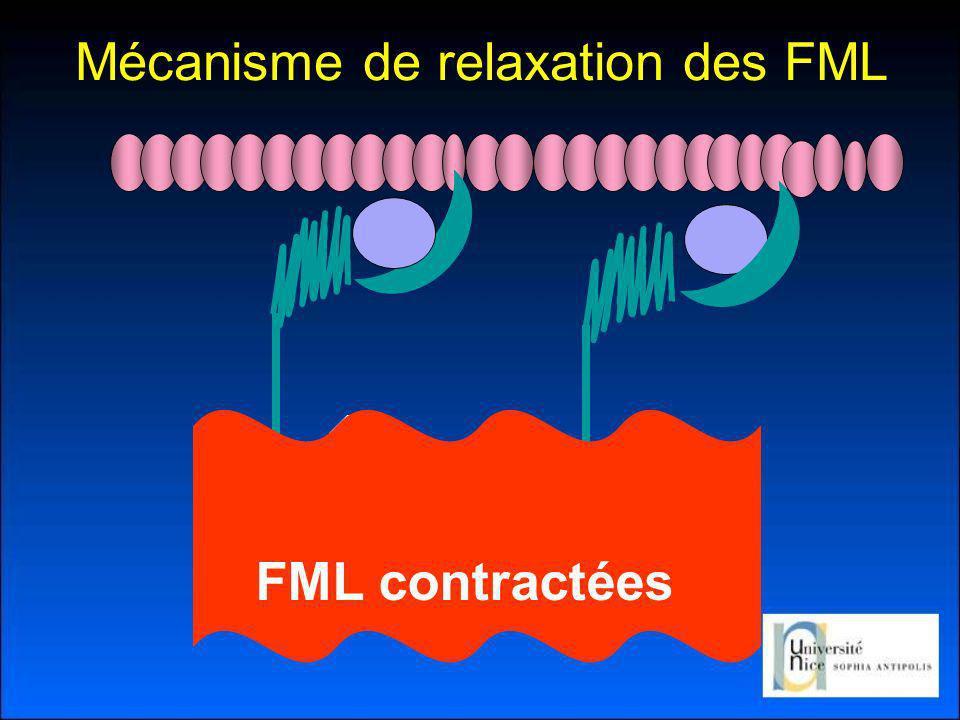 FML contractées Mécanisme de relaxation des FML