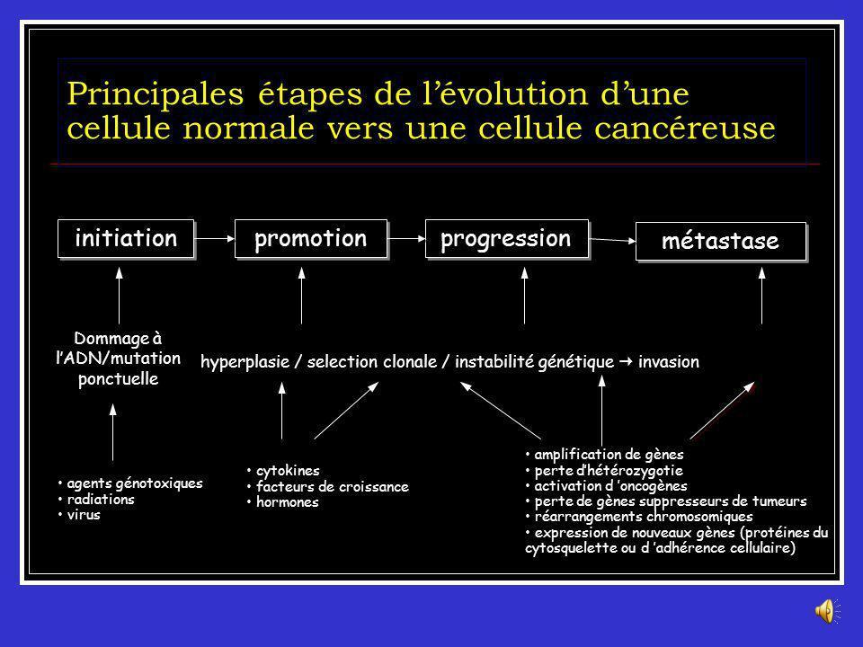 3 ème étape : Progression Phase clinique : étape finale dans le développement du cancer. La néoplasie est cliniquement détectable Survenue de métastas