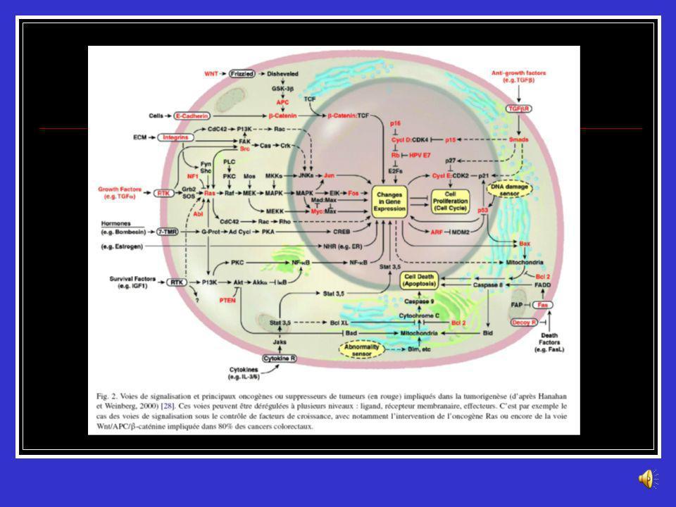 Altérations Génétiques Les principales voies Syndromes de prédisposition génétique Méthylation de lADN Altération du génome mitochondrial Altérations
