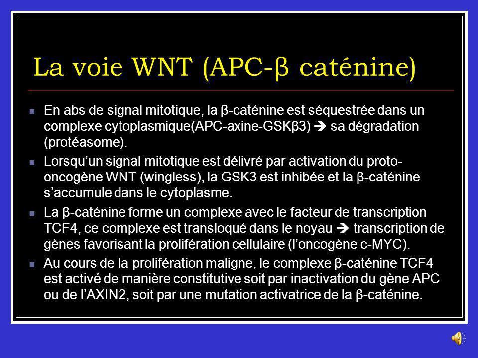 La voie WNT (APC-β caténine) Le gène APC est un gène suppresseur de tumeur situé sur le chromosome 5 (5q21- q22). Il code pour une protéine de 312 kDa