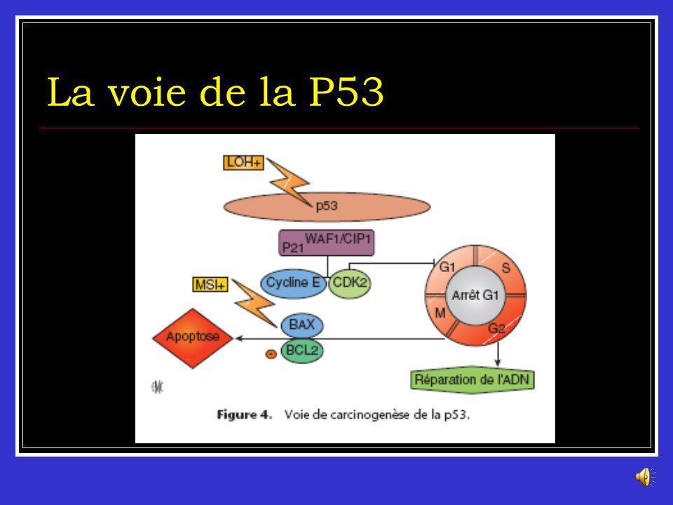 La voie de la P53 Le gène TP53 est un gène suppresseur de tumeur, il est situé en 17p. Il est désactivé à la fois par des pertes alléliques et des mut