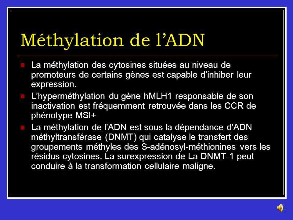 Syndrome HNPCC Mutation constitutionnelle dun des gènes du MMR (hMSH2 ou hMLH1…) Ces tumeurs sont toujours de phénotype MSI+ 3% des CCR Dautres tumeur