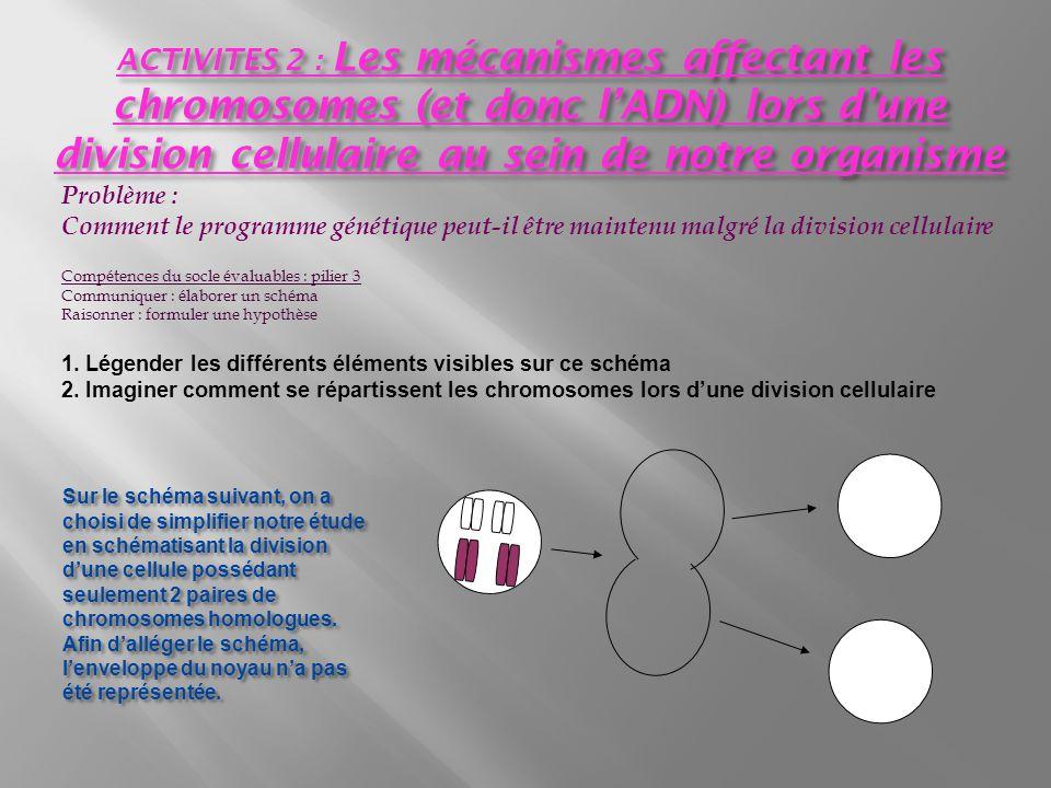 Problème : Comment le programme génétique peut-il être maintenu malgré la division cellulaire Compétences du socle évaluables : pilier 3 Communiquer : élaborer un schéma Raisonner : formuler une hypothèse 1.