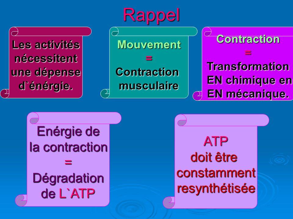 Les filières énergétiques Il existe trois filières de resynthèse de l`ATP mis en œuvre Préférentiellement selon l`intensité et la durée de l`effort.