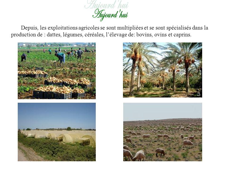Depuis, les exploitations agricoles se sont multipliées et se sont spécialisés dans la production de : dattes, légumes, céréales, lélevage de: bovins, ovins et caprins.