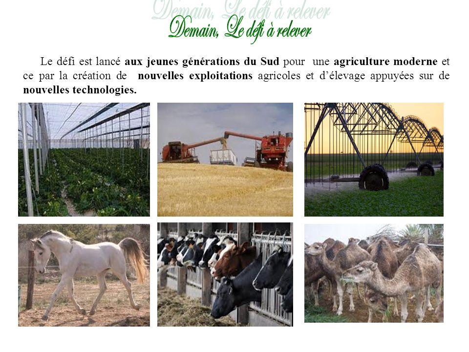 Le défi est lancé aux jeunes générations du Sud pour une agriculture moderne et ce par la création de nouvelles exploitations agricoles et délevage appuyées sur de nouvelles technologies.