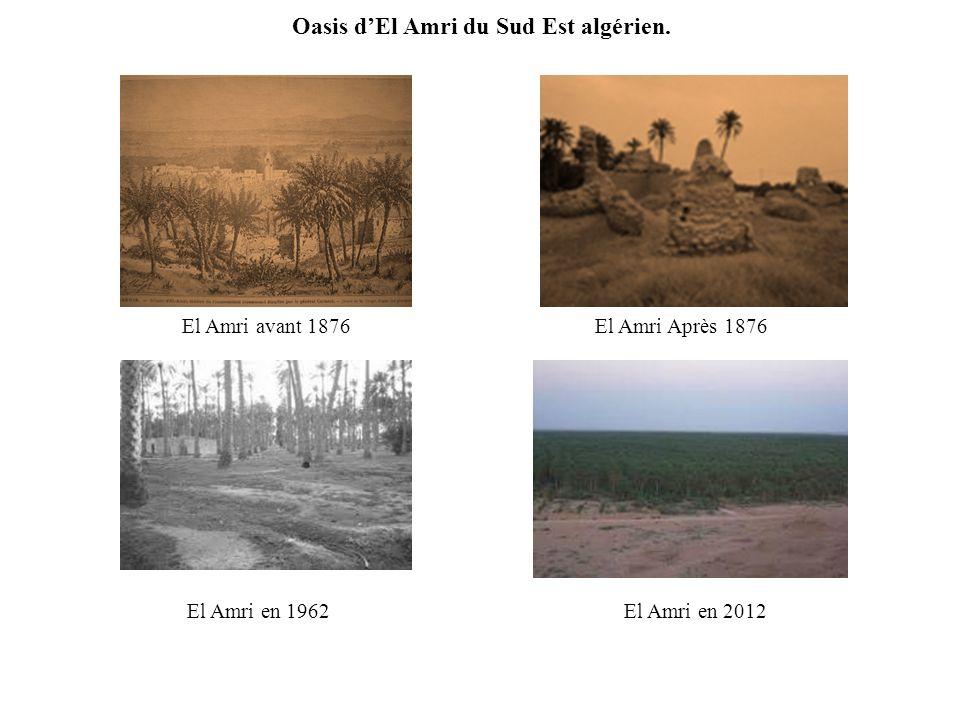 Oasis dEl Amri du Sud Est algérien.