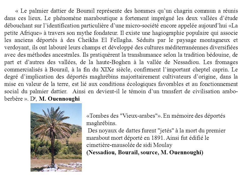« Le palmier dattier de Bourail représente des hommes quun chagrin commun a réunis dans ces lieux.