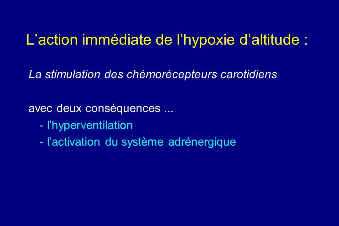 Laction immédiate de lhypoxie daltitude : La stimulation des chémorécepteurs carotidiens avec deux conséquences... - lhyperventilation - lactivation d