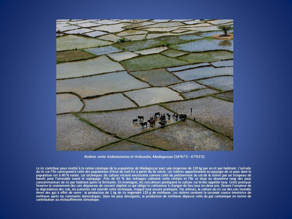Rizières entre Antananarivo et Ankazobe, Madagascar (18°47S - 47°23E). Le riz contribue pour moitié à la ration calorique de la population de Madagasc