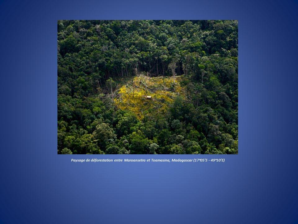 Paysage de déforestation entre Maroansetra et Toamasina, Madagascar (17°05S - 49°10E)