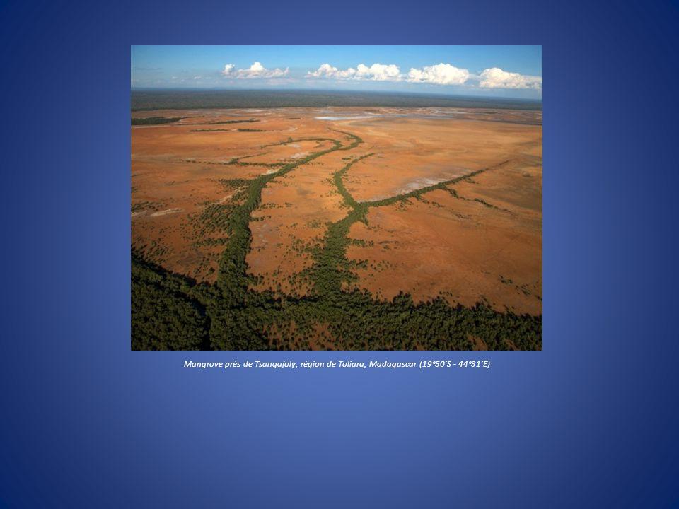 Mangrove près de Tsangajoly, région de Toliara, Madagascar (19°50S - 44°31E)