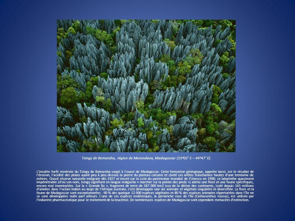 Tsingy de Bemaraha, région de Morondava, Madagascar (19°02 S – 44°47 E). Linsolite forêt minérale du Tsingy de Bemaraha surgit à louest de Madagascar.