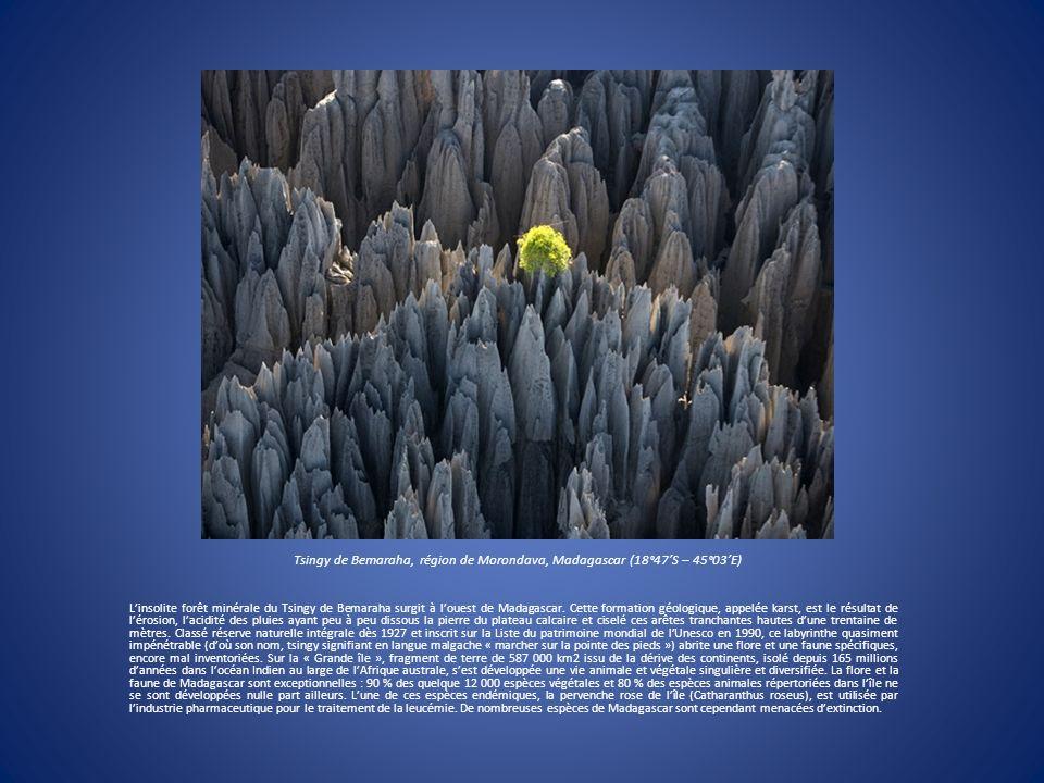 Tsingy de Bemaraha, région de Morondava, Madagascar (18°47S – 45°03E) Linsolite forêt minérale du Tsingy de Bemaraha surgit à louest de Madagascar. Ce