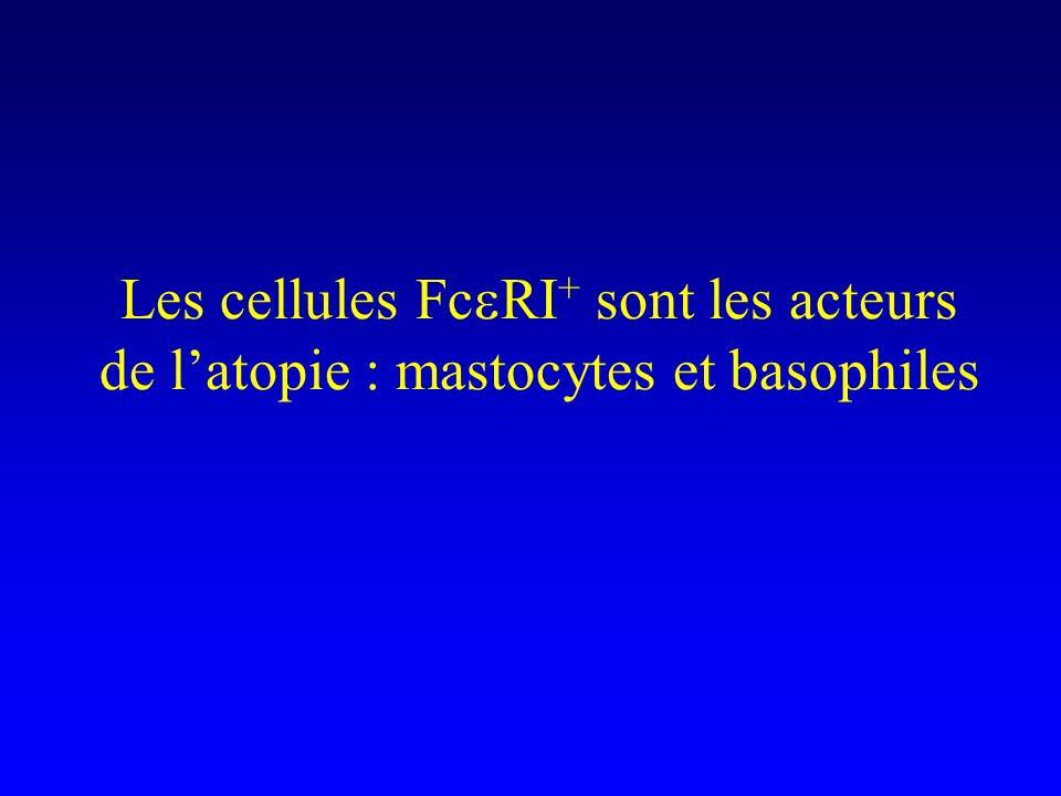 Les cellules Fc RI + sont les acteurs de latopie : mastocytes et basophiles