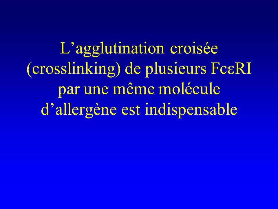 Lagglutination croisée (crosslinking) de plusieurs Fc RI par une même molécule dallergène est indispensable