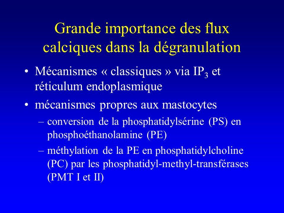Grande importance des flux calciques dans la dégranulation Mécanismes « classiques » via IP 3 et réticulum endoplasmique mécanismes propres aux mastocytes –conversion de la phosphatidylsérine (PS) en phosphoéthanolamine (PE) –méthylation de la PE en phosphatidylcholine (PC) par les phosphatidyl-methyl-transférases (PMT I et II)