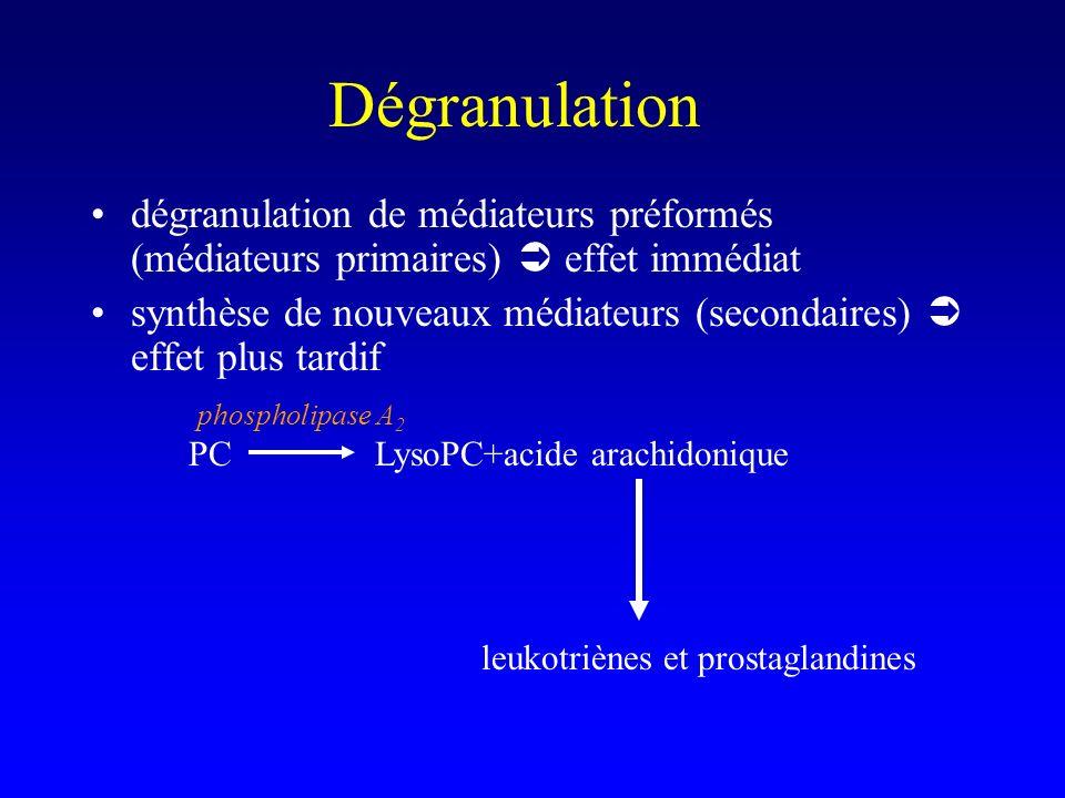 Dégranulation dégranulation de médiateurs préformés (médiateurs primaires) effet immédiat synthèse de nouveaux médiateurs (secondaires) effet plus tardif PCLysoPC+acide arachidonique leukotriènes et prostaglandines phospholipase A 2