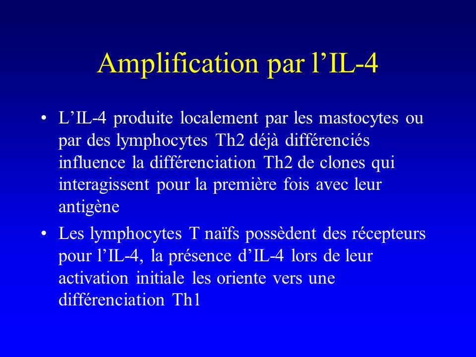 Amplification par lIL-4 LIL-4 produite localement par les mastocytes ou par des lymphocytes Th2 déjà différenciés influence la différenciation Th2 de clones qui interagissent pour la première fois avec leur antigène Les lymphocytes T naïfs possèdent des récepteurs pour lIL-4, la présence dIL-4 lors de leur activation initiale les oriente vers une différenciation Th1