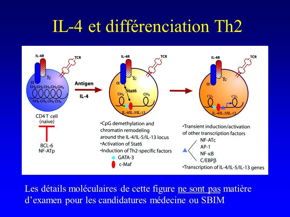 IL-4 et différenciation Th2 Les détails moléculaires de cette figure ne sont pas matière dexamen pour les candidatures médecine ou SBIM