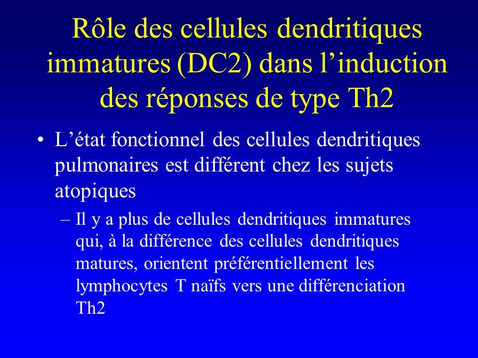Rôle des cellules dendritiques immatures (DC2) dans linduction des réponses de type Th2 Létat fonctionnel des cellules dendritiques pulmonaires est différent chez les sujets atopiques –Il y a plus de cellules dendritiques immatures qui, à la différence des cellules dendritiques matures, orientent préférentiellement les lymphocytes T naïfs vers une différenciation Th2
