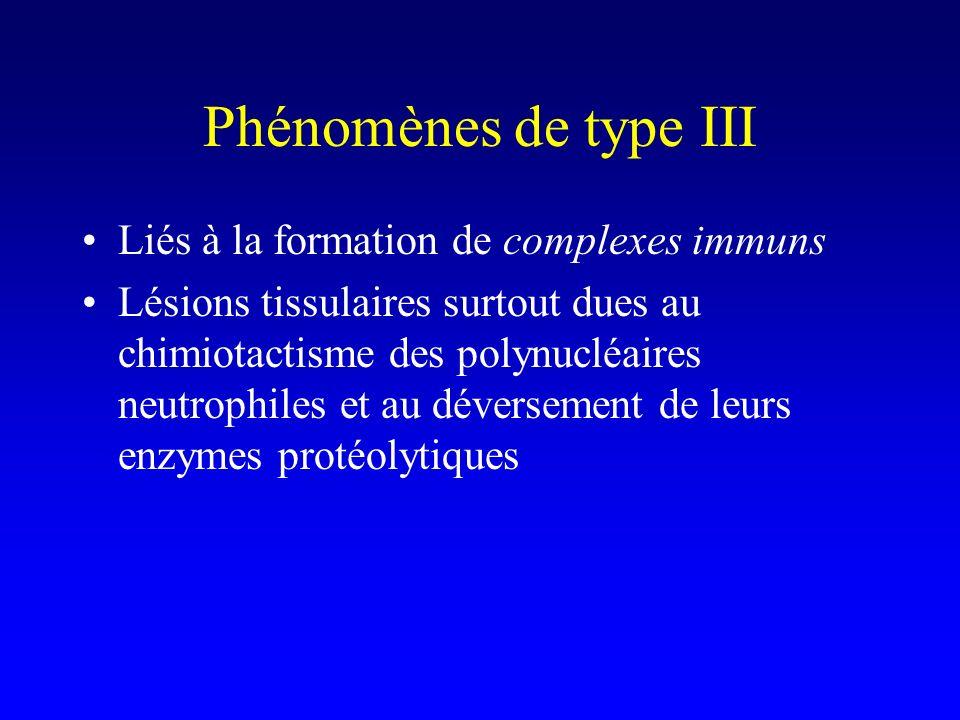 Phénomènes de type III Liés à la formation de complexes immuns Lésions tissulaires surtout dues au chimiotactisme des polynucléaires neutrophiles et au déversement de leurs enzymes protéolytiques