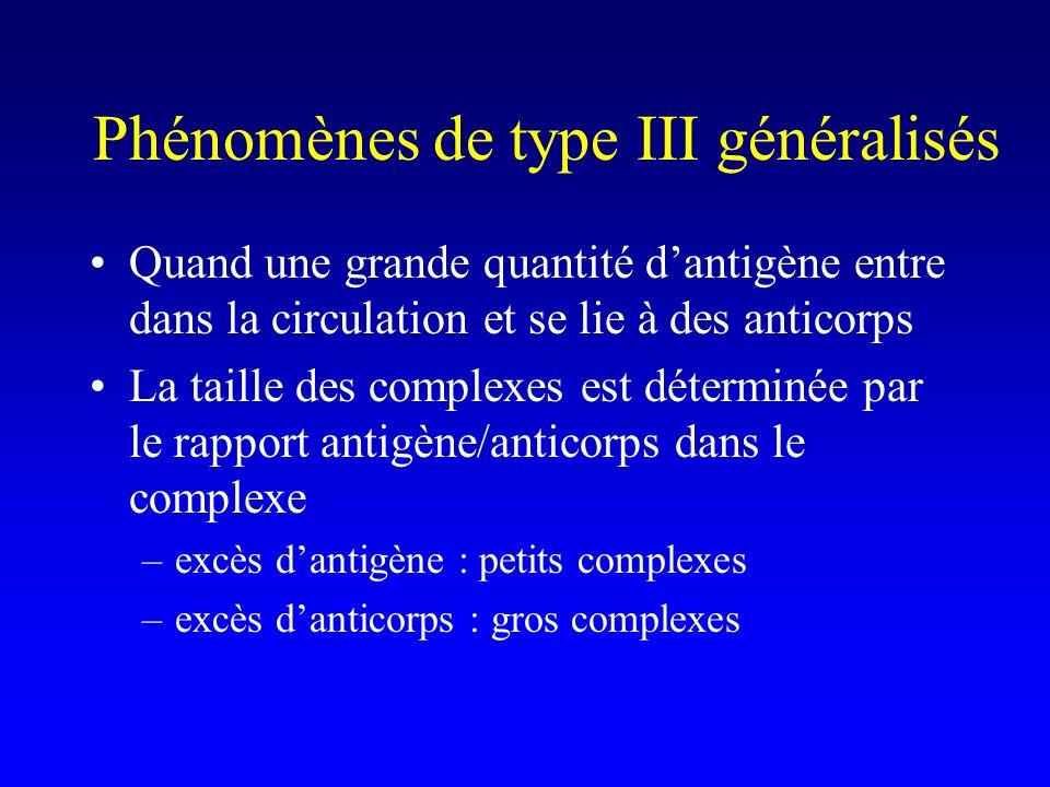 Phénomènes de type III généralisés Quand une grande quantité dantigène entre dans la circulation et se lie à des anticorps La taille des complexes est déterminée par le rapport antigène/anticorps dans le complexe –excès dantigène : petits complexes –excès danticorps : gros complexes