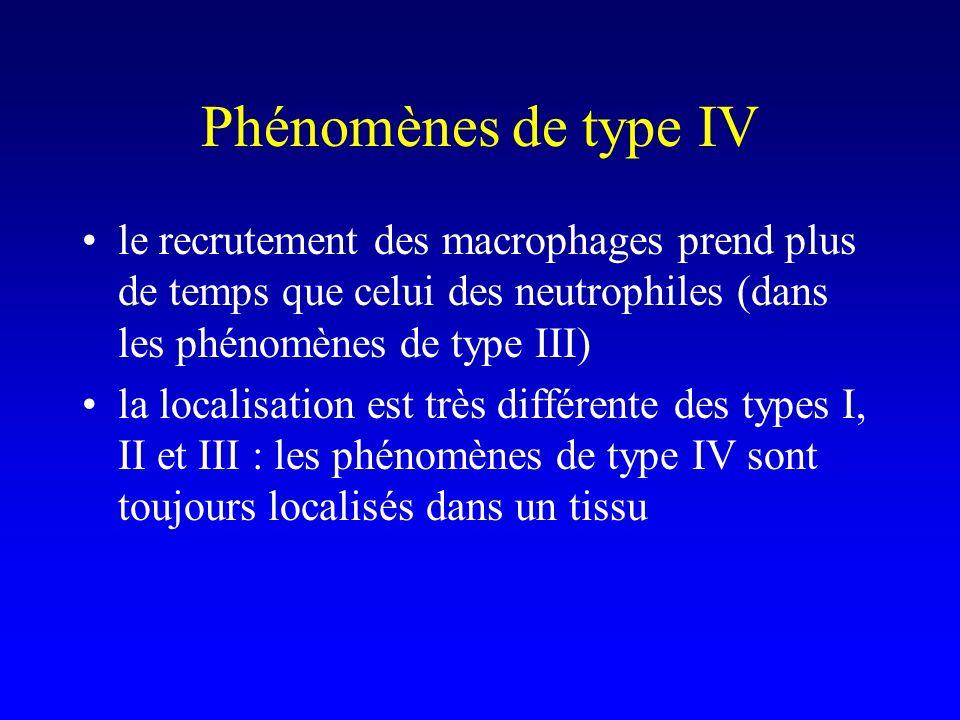 Phénomènes de type IV le recrutement des macrophages prend plus de temps que celui des neutrophiles (dans les phénomènes de type III) la localisation est très différente des types I, II et III : les phénomènes de type IV sont toujours localisés dans un tissu