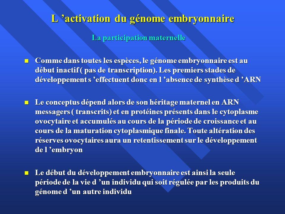 L activation du génome embryonnaire La participation maternelle La participation maternelle Comme dans toutes les espèces, le génome embryonnaire est