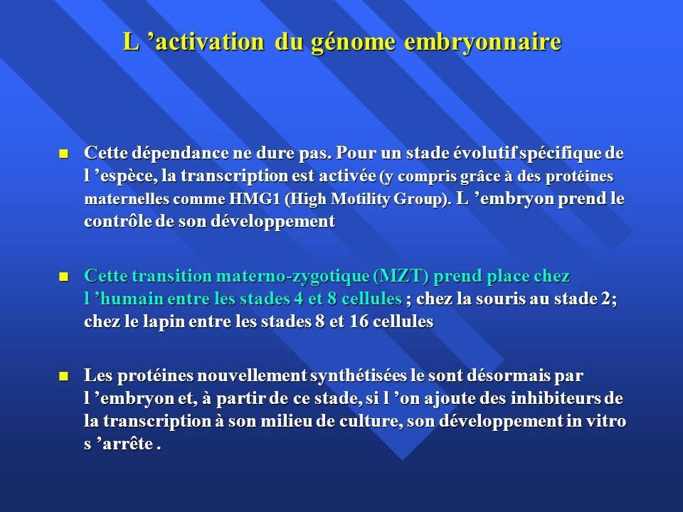 L activation du génome embryonnaire Cette dépendance ne dure pas. Pour un stade évolutif spécifique de l espèce, la transcription est activée (y compr