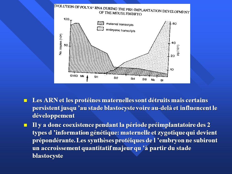 Les ARN et les protéines maternelles sont détruits mais certains persistent jusqu au stade blastocyste voire au-delà et influencent le développement L