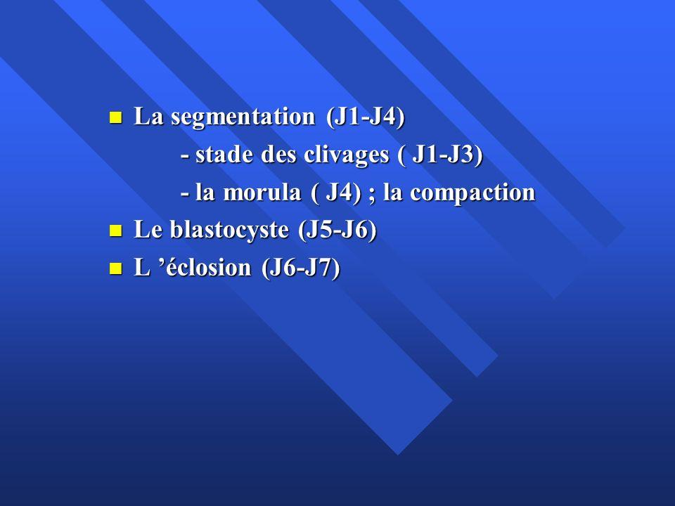 Pendant son séjour dans la trompe, l embryon subit une série de divisions cellulaires, appelées segmentation ou clivage, qui ne s accompagnent d aucune croissance: la morula n est pas plus volumineuse que le zygote et l embryon reste inclus dans la ZP Pendant son séjour dans la trompe, l embryon subit une série de divisions cellulaires, appelées segmentation ou clivage, qui ne s accompagnent d aucune croissance: la morula n est pas plus volumineuse que le zygote et l embryon reste inclus dans la ZP A chaque division, la taille des cellules diminue, partageant le cytoplasme abondant du zygote entre les cellules filles ou blastomères A chaque division, la taille des cellules diminue, partageant le cytoplasme abondant du zygote entre les cellules filles ou blastomères Le rapport cytoplasme/noyau élevé de l œuf fécondé est ainsi progressivement ramené à celui d une cellule somatique adulte Le rapport cytoplasme/noyau élevé de l œuf fécondé est ainsi progressivement ramené à celui d une cellule somatique adulte