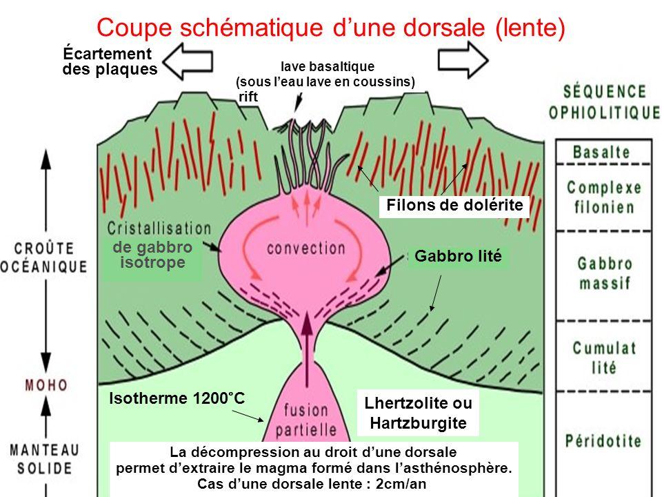 - Un point chaud résulte des mouvements de convection provenant du manteau profond, peut être même de la limite entre le manteau et le noyau.