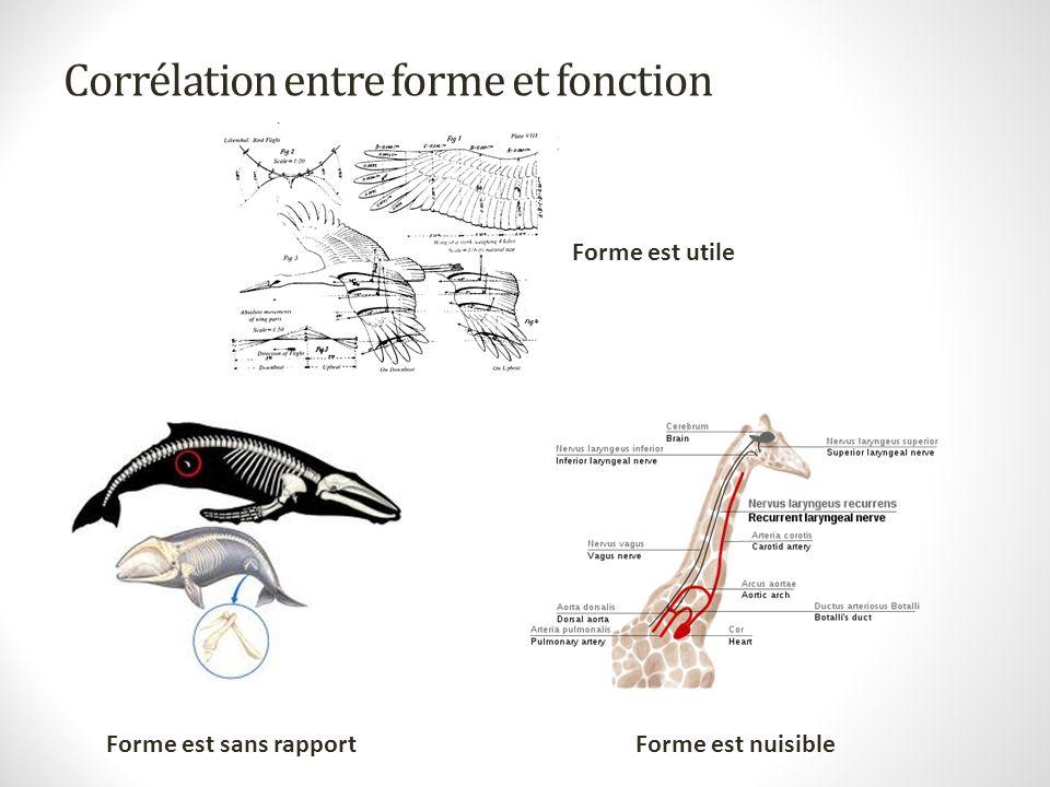 Corrélation entre forme et fonction Forme est sans rapportForme est nuisible Forme est utile