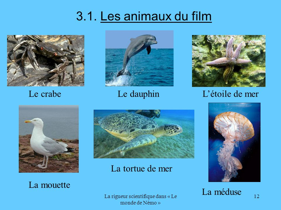 La rigueur scientifique dans « Le monde de Némo » 12 3.1. Les animaux du film Le crabe Le dauphin Létoile de mer La mouette La tortue de mer La méduse
