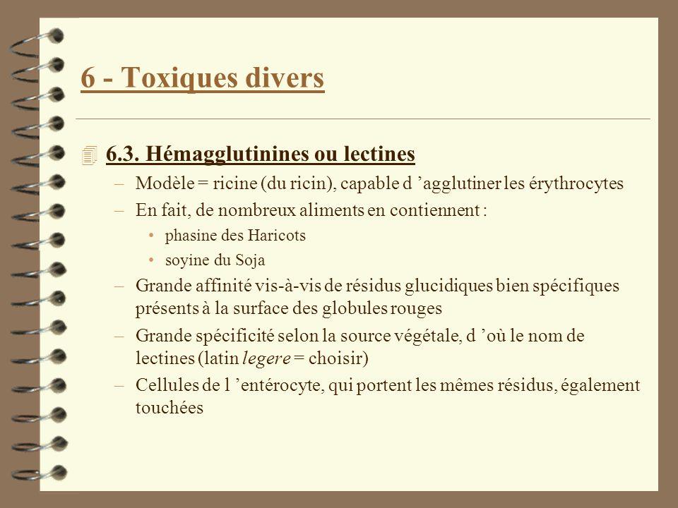 6 - Toxiques divers 4 6.3. Hémagglutinines ou lectines –Modèle = ricine (du ricin), capable d agglutiner les érythrocytes –En fait, de nombreux alimen