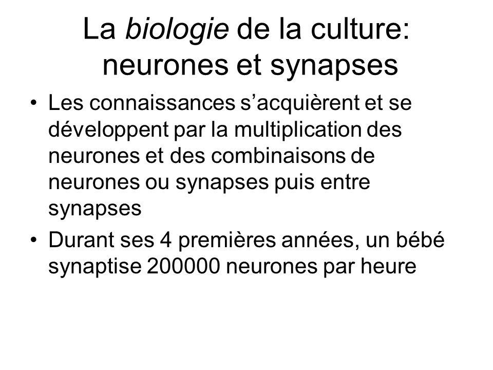 La biologie de la culture: neurones et synapses Les connaissances sacquièrent et se développent par la multiplication des neurones et des combinaisons