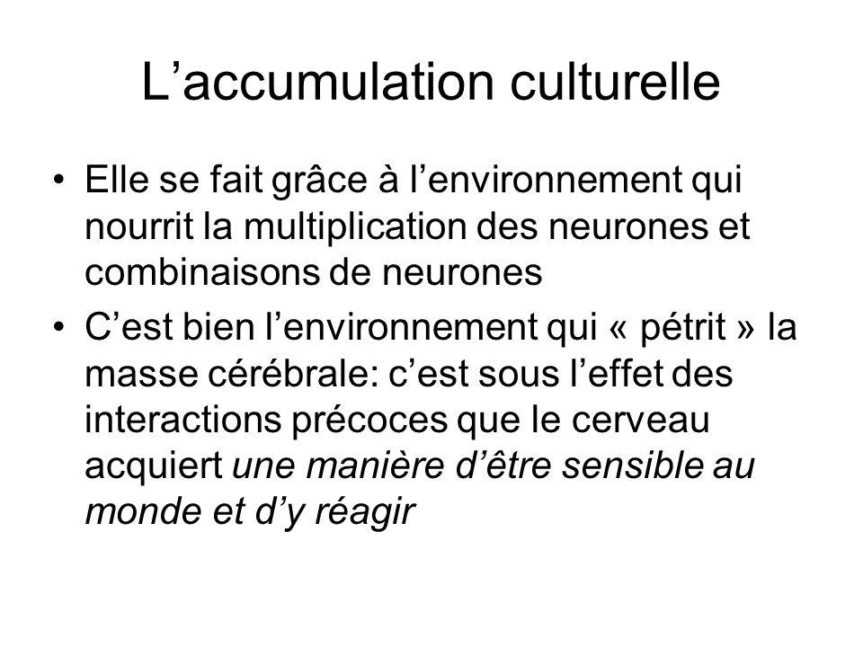 Laccumulation culturelle Elle se fait grâce à lenvironnement qui nourrit la multiplication des neurones et combinaisons de neurones Cest bien lenviron