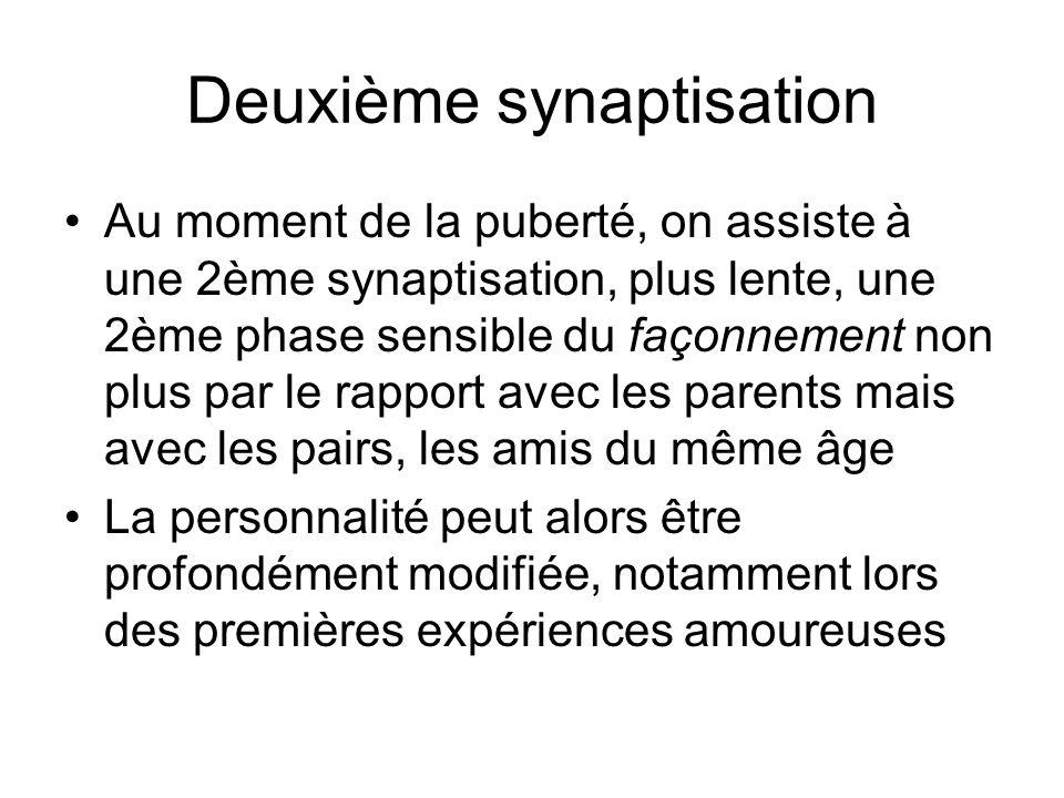 Deuxième synaptisation Au moment de la puberté, on assiste à une 2ème synaptisation, plus lente, une 2ème phase sensible du façonnement non plus par l