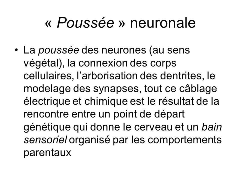 « Poussée » neuronale La poussée des neurones (au sens végétal), la connexion des corps cellulaires, larborisation des dentrites, le modelage des syna