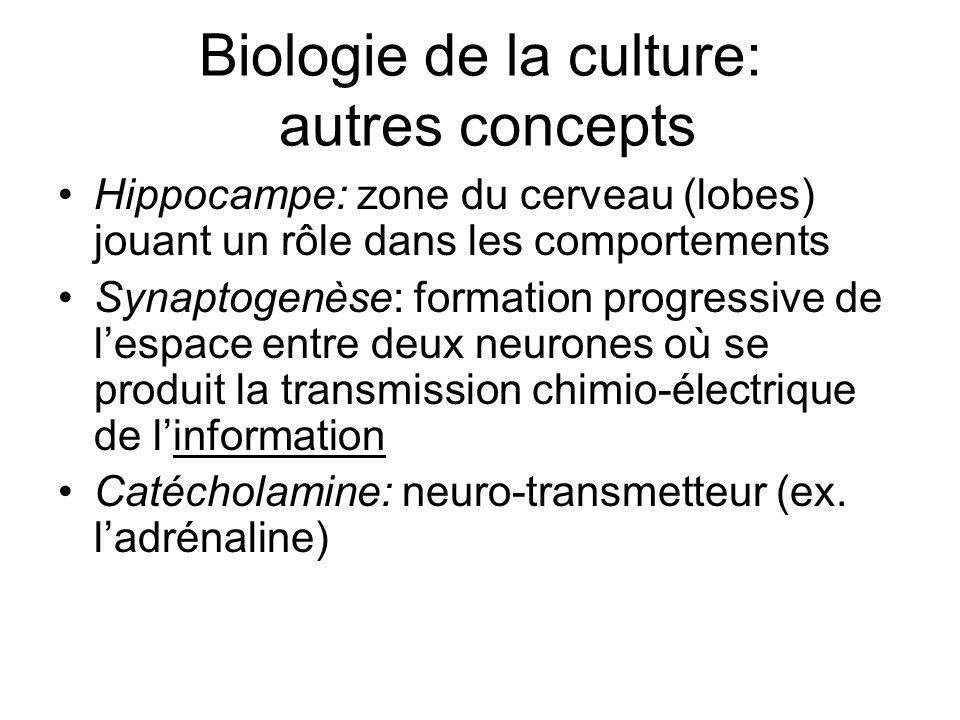 Biologie de la culture: autres concepts Hippocampe: zone du cerveau (lobes) jouant un rôle dans les comportements Synaptogenèse: formation progressive