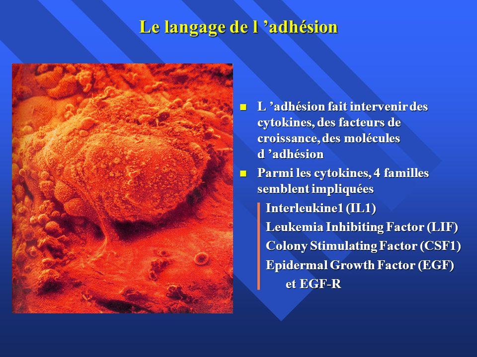 Le langage de l adhésion L adhésion fait intervenir des cytokines, des facteurs de croissance, des molécules d adhésion L adhésion fait intervenir des